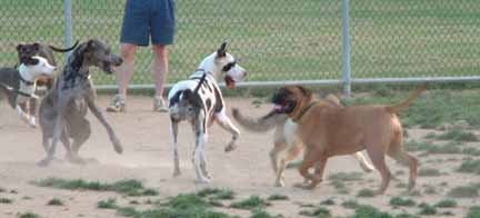 Dog In A Dog Park